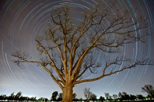 The_Olmsted_Oak_star_trails_ws.jpg